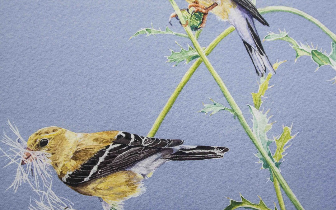 Watercolour painting, goldfinches