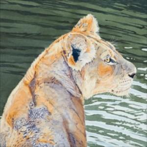 watercolour painting, lion