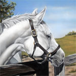 Fenced In horse painting