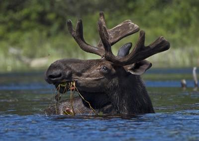 Robin Tapley Moose